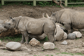 Join Blank Park Zoo to protect wild rhinos and support the