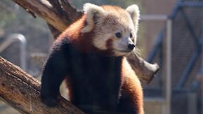 Conservation Education Recreation Des Moines Iowa Blank Park Zoo